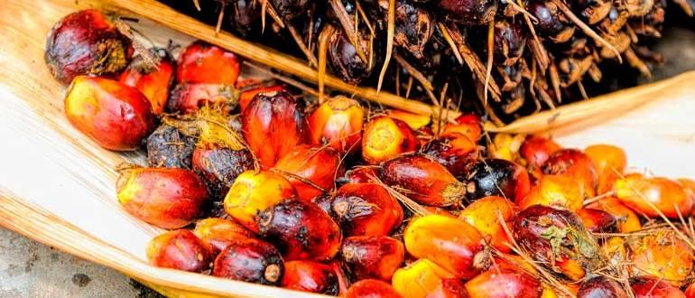 Пальмовое масло - вред и польза